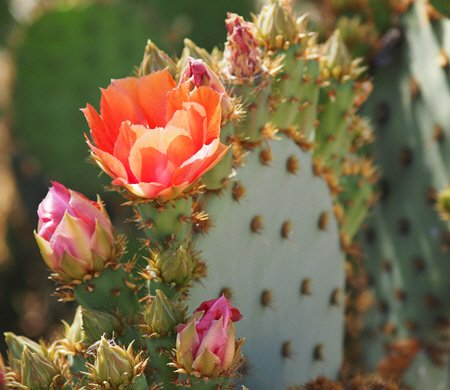 About Claibourne Counseling - Flowering Cactus