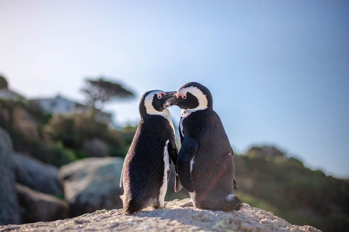 Penguins Mate for Life - Best Couples therapy near me